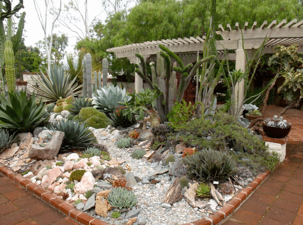 landscaping, cactus, succulents